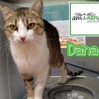 Foto de Dana (no disponible para adopción)